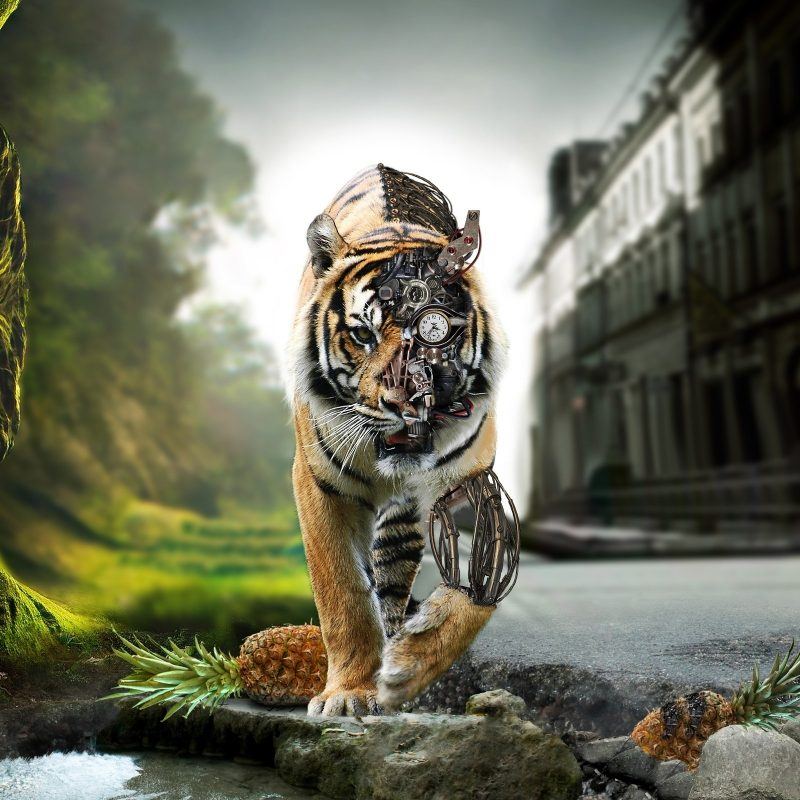 10 Latest Hd Wallpaper Widescreen 1080P FULL HD 1080p For PC Background 2021 free download 3d tiger bionic hd wallpaper widescreen 1080p download download hd 800x800