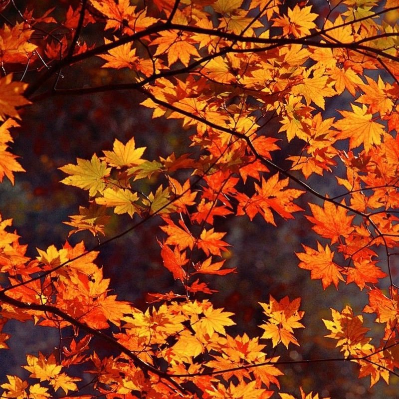 10 Latest Fall Leaves Desktop Background FULL HD 1920×1080 For PC Desktop 2018 free download 4 incredibly cute and easy treats to make this fall autumn nature 800x800