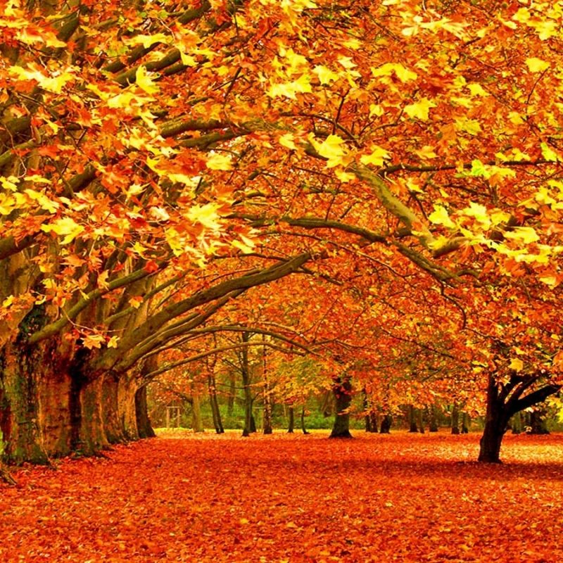 10 Most Popular Fall Wallpaper For Desktops FULL HD 1080p For PC Background 2020 free download 40 autumn wallpapers hd autumn wallpapers and photos view hd 800x800