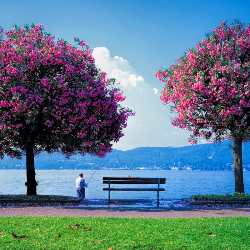 10 New Free Desktop Wallpaper Spring Scenes FULL HD 1080p For PC Background 2021 free download 44 spring scenes wallpapers spring scenes high quality pictures 2 800x800