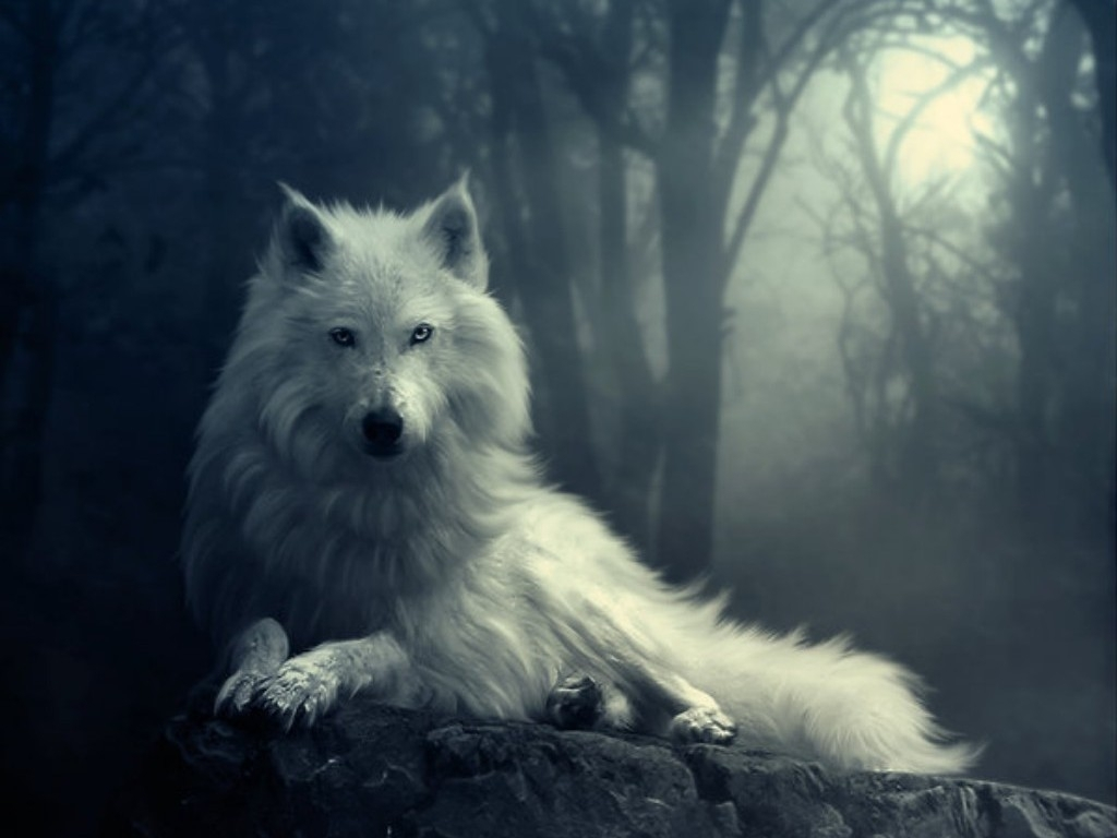 49+ wolf wallpapers, hd quality wolf images, wolf wallpapers full hd