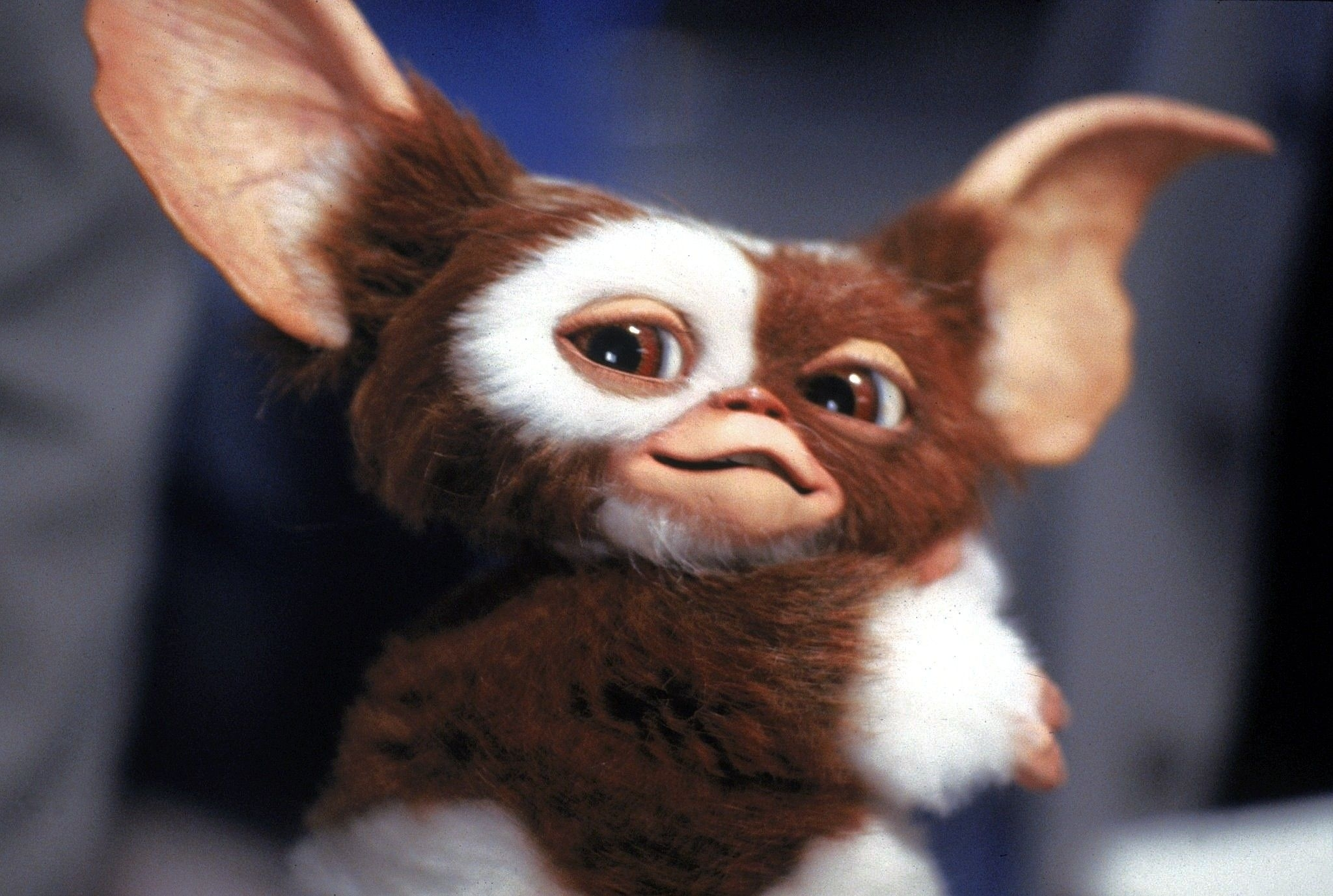 5 best movies to watch - gremlins | gremlins, movie and horror