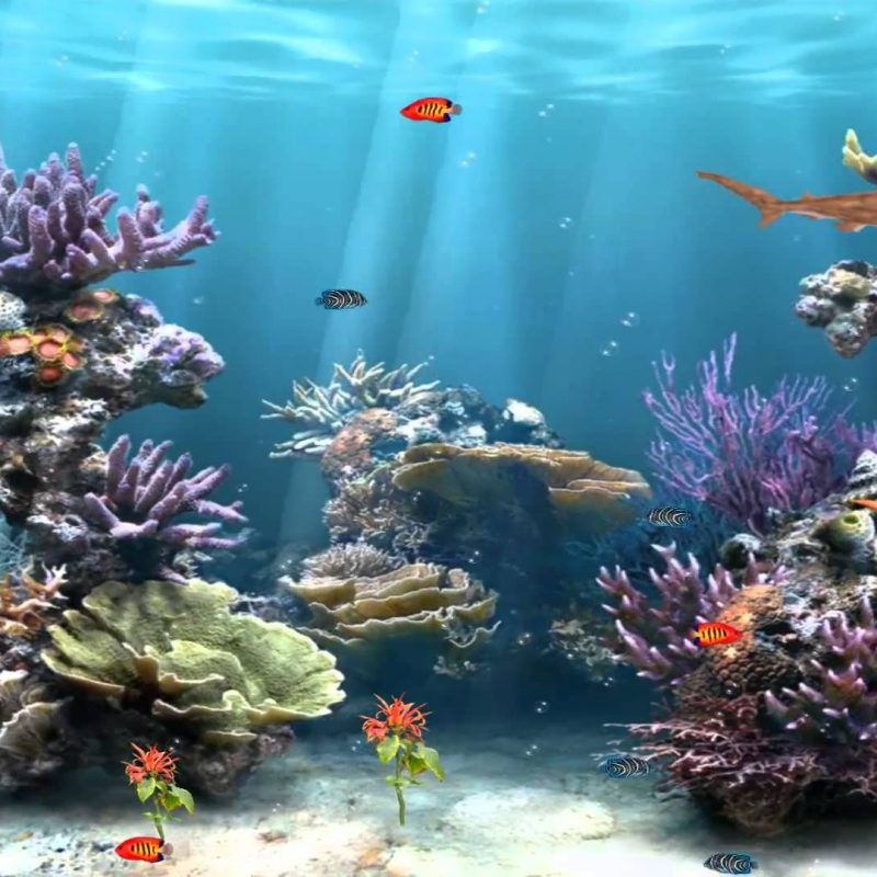 10 Latest Fish Tank Background Wallpaper FULL HD 1920×1080 For PC Background 2020 free download 50 best aquarium backgrounds to download print free premium 800x800