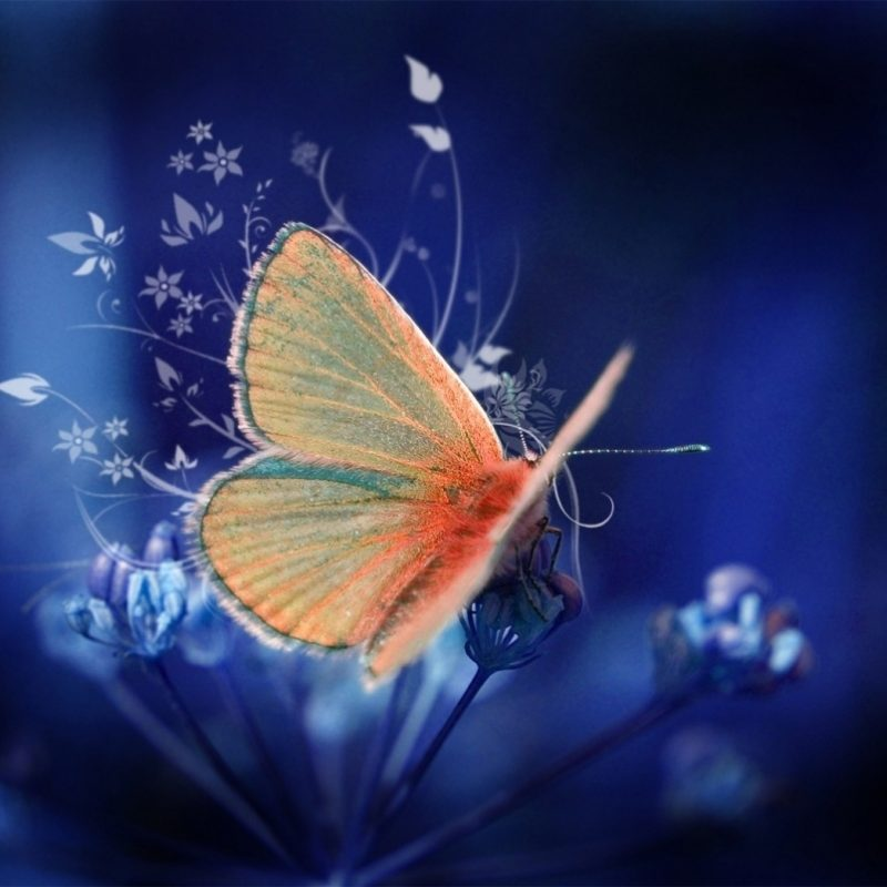 10 Most Popular Beautiful Wallpapers Of Butterflies FULL HD 1920×1080 For PC Desktop 2018 free download 55 colorful butterfly hd free images wallpapers download 800x800