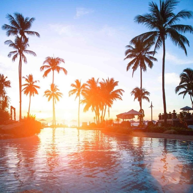 10 Best Palm Trees Wallpaper Hd FULL HD 1080p For PC Background 2018 free download 5731297 palm trees wallpaper wallpaper hd background 800x800