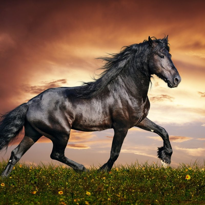 10 Latest Horse Backgrounds For Computers FULL HD 1920×1080 For PC Background 2021 free download 60 horse backgrounds c2b7e291a0 download free stunning high resolution 800x800