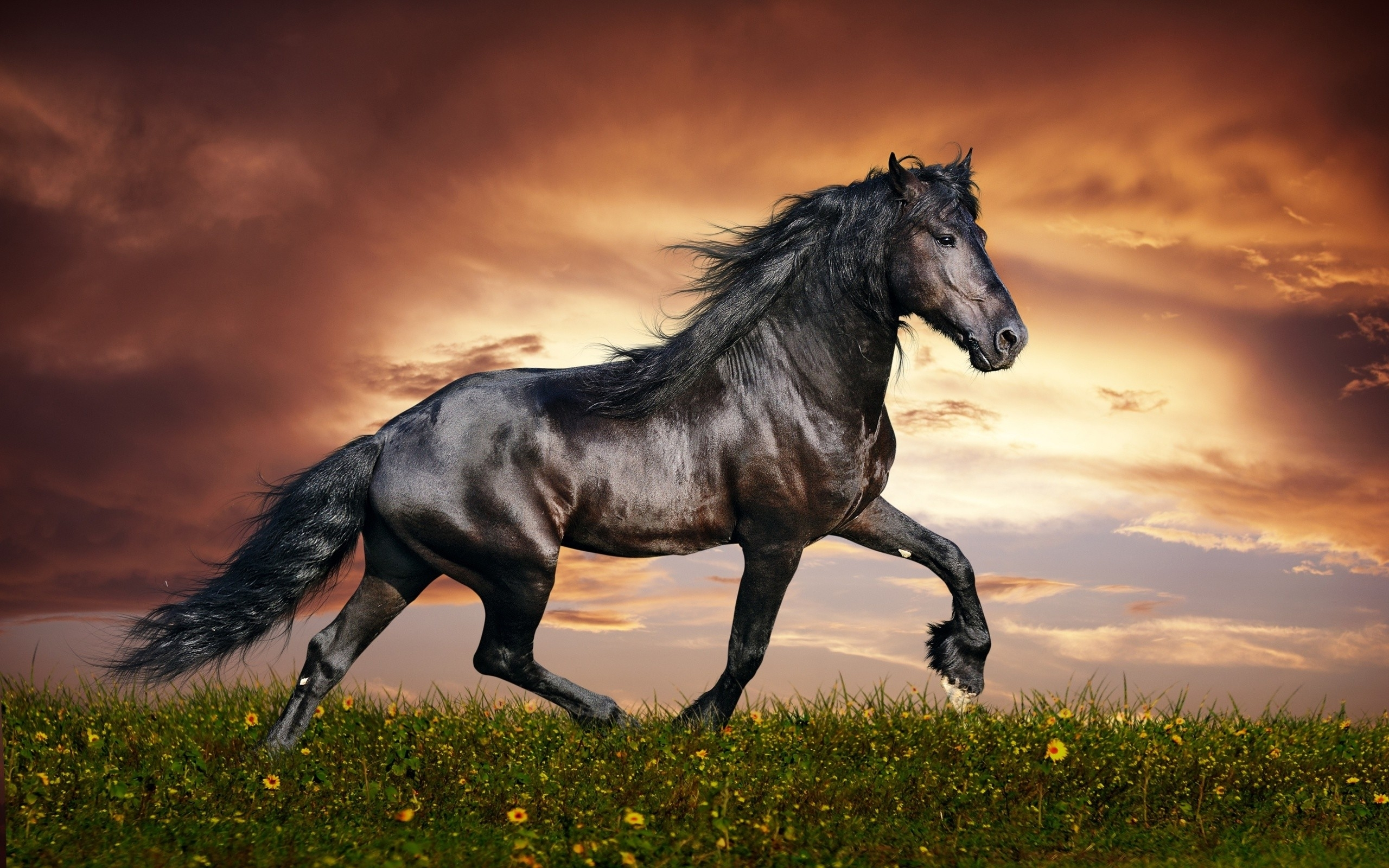 60+ horse backgrounds ·① download free stunning high resolution