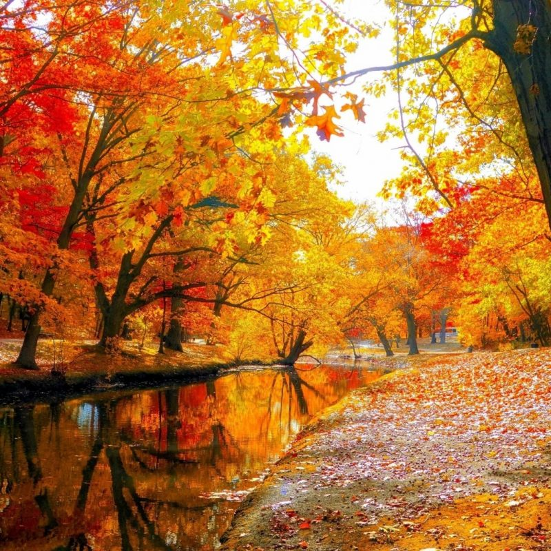 10 Top Autumn Forest Wallpaper Widescreen FULL HD 1080p For PC Desktop 2020 free download 640x360 wallpapers page 838 forest landscapes fall seasons autumn 800x800