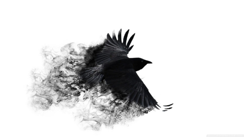 10 Top Black Crow Wallpaper FULL HD 1920×1080 For PC Background 2020 free download 70 crow desktop wallpapers on wallpaperplay 800x450