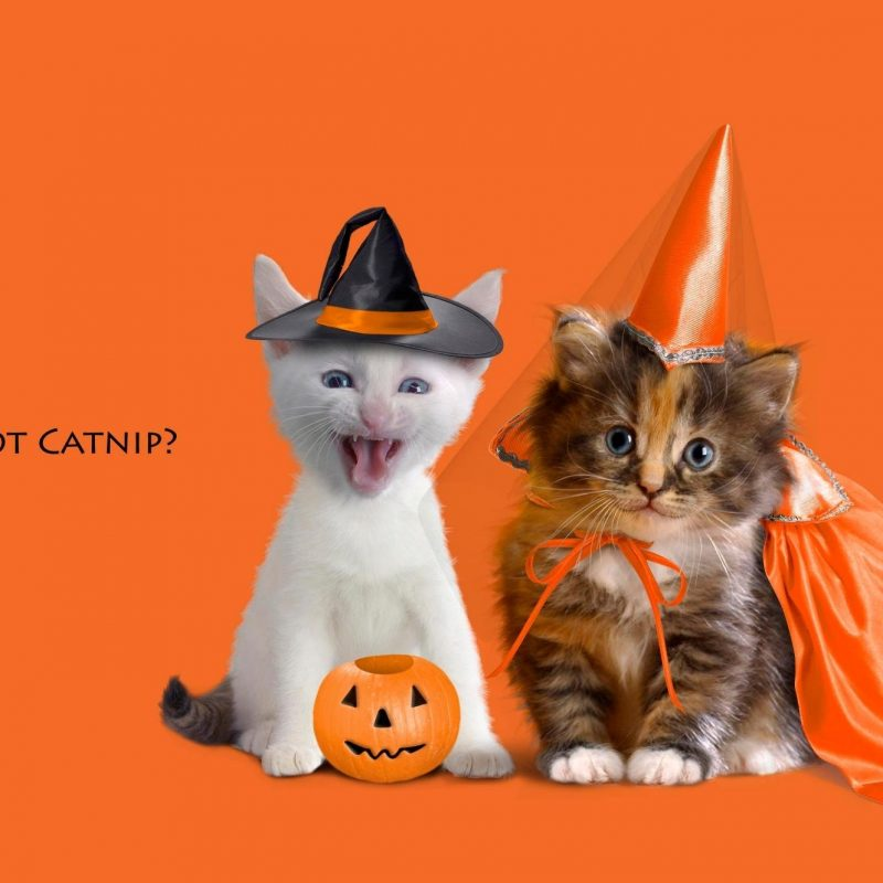 10 Top Cute Cat Halloween Wallpaper FULL HD 1920×1080 For PC Background 2018 free download 796 halloween hd wallpapers background images wallpaper abyss 2 800x800