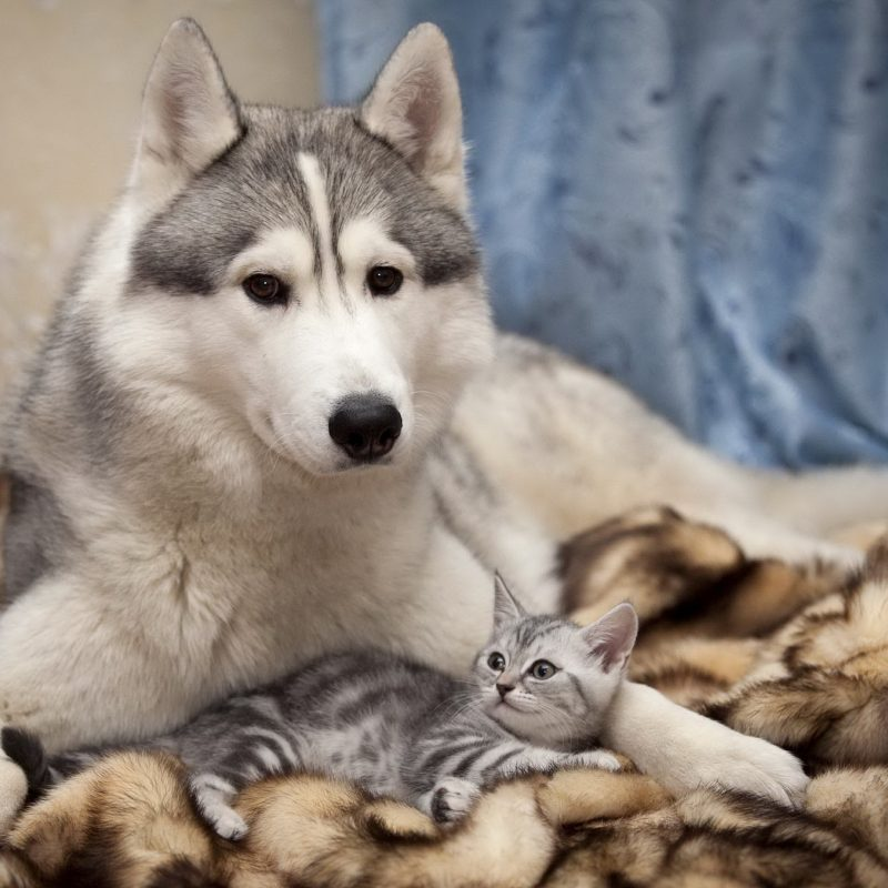 10 Most Popular Dog And Cat Wallpapers FULL HD 1080p For PC Background 2020 free download 95 cat dog hd wallpapers background images wallpaper abyss 2 800x800