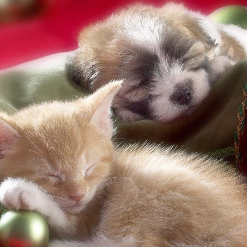 10 Latest Puppy And Kitten Backgrounds FULL HD 1920×1080 For PC Desktop 2018 free download 95 cat dog hd wallpapers background images wallpaper abyss 800x800