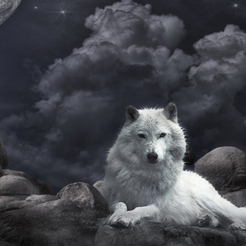 10 New Wolf Pictures For Wallpaper FULL HD 1920×1080 For PC Desktop 2020 free download 966 wolf hd wallpapers background images wallpaper abyss 10 800x800