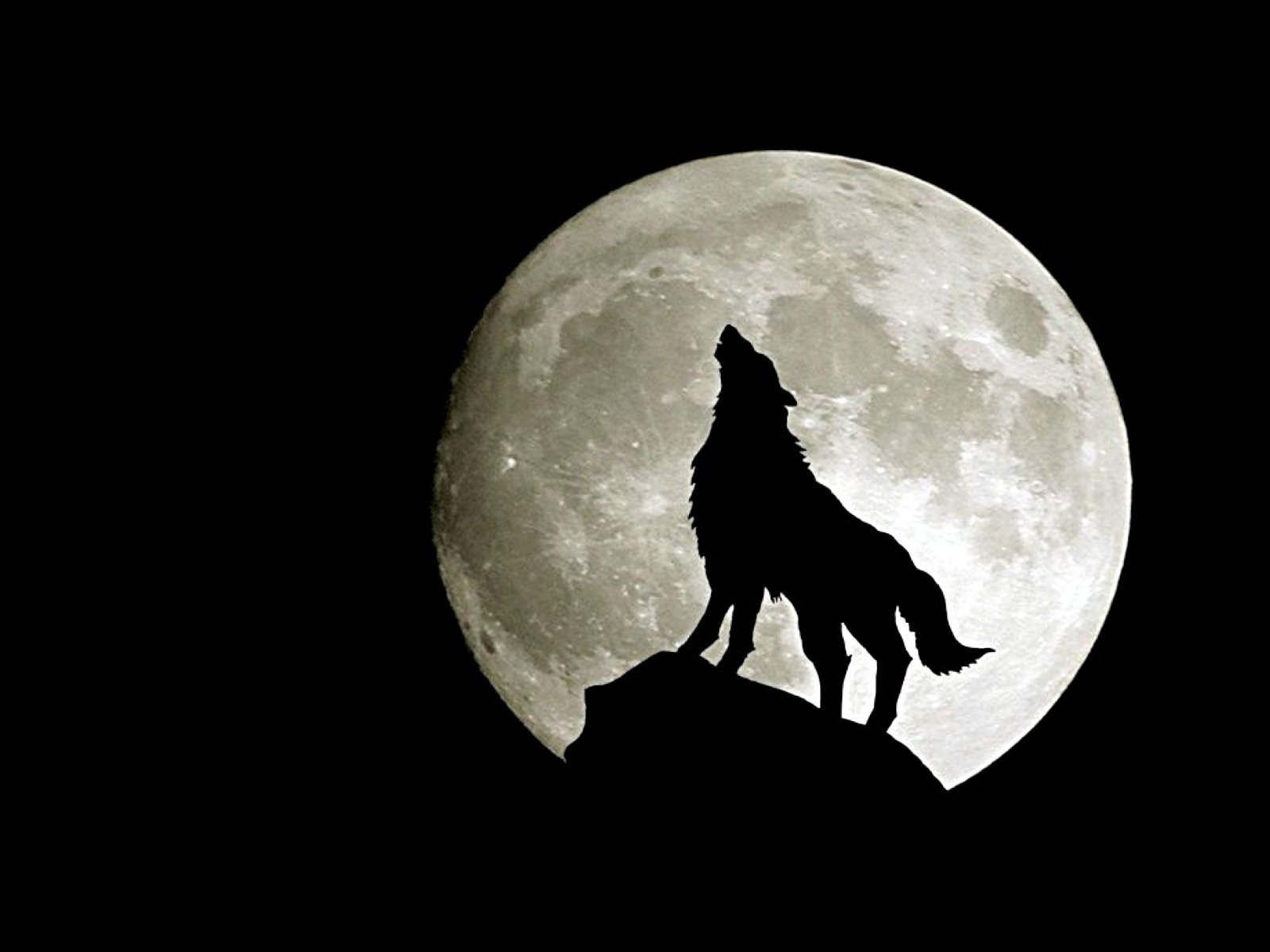 966 wolf hd wallpapers | background images - wallpaper abyss
