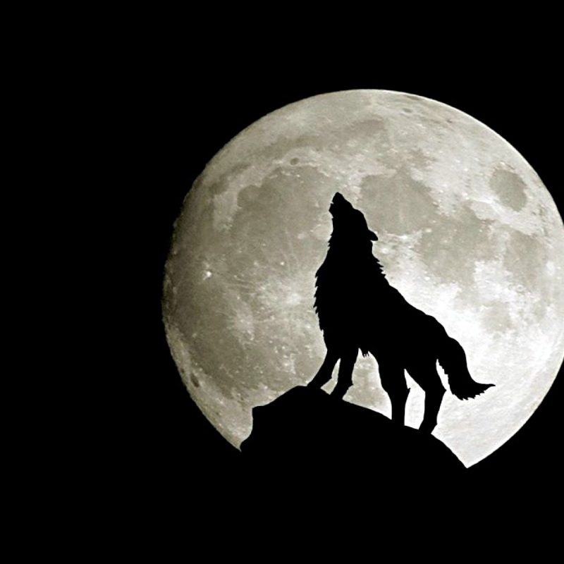 10 Latest Wolf And Moon Wallpaper FULL HD 1080p For PC Desktop 2021 free download 966 wolf hd wallpapers background images wallpaper abyss 2 800x800