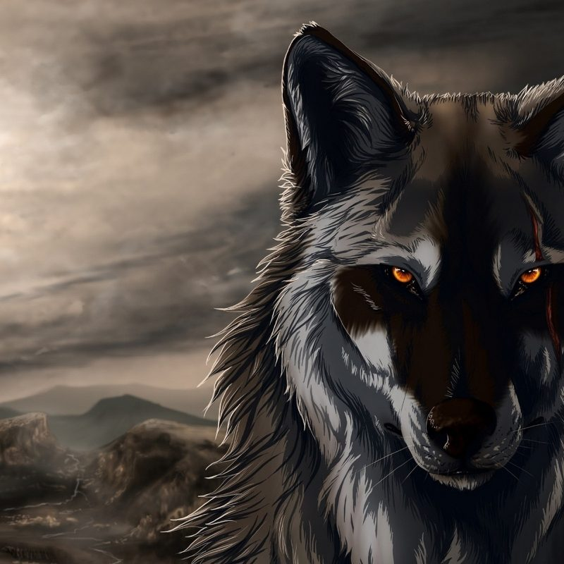 10 Most Popular Cool Wolf Wallpaper Hd FULL HD 1080p For PC Desktop 2020 free download 966 wolf hd wallpapers background images wallpaper abyss 4 800x800