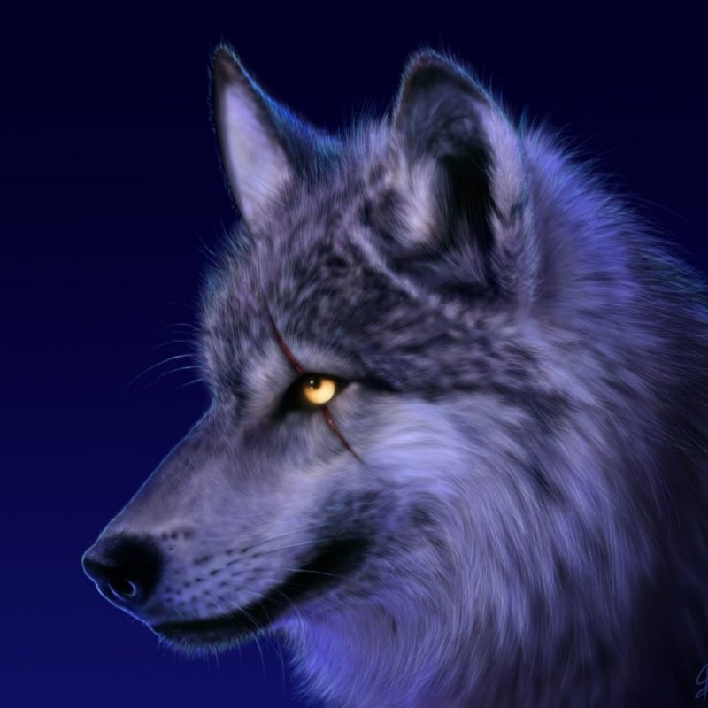 10 Most Popular Cool Wolf Wallpaper Hd FULL HD 1080p For PC Desktop 2020 free download 966 wolf hd wallpapers background images wallpaper abyss 5 800x800