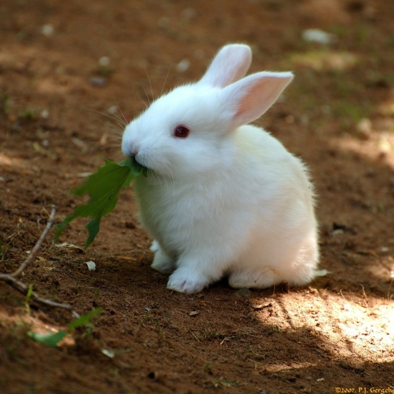 10 Most Popular Cute Baby Bunny Images FULL HD 1920×1080 For PC Desktop 2021 free download a baby bunny at the nearby shubenacadie wildlife park nova scotia 800x800