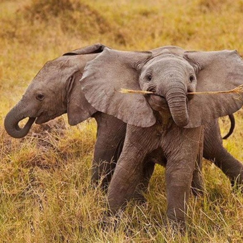10 Top Picture Of A Baby Elephant FULL HD 1920×1080 For PC Desktop 2018 free download a cute baby elephant for your weekend jodi l milner author 800x800