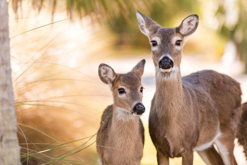 10 Latest Images Of Deers FULL HD 1920×1080 For PC Desktop 2021 free download a humane world 800x534