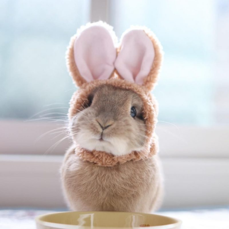 10 Most Popular Cute Baby Bunny Images FULL HD 1920×1080 For PC Desktop 2021 free download a little bunny in a bunny suit now how cute is this adorable 800x800