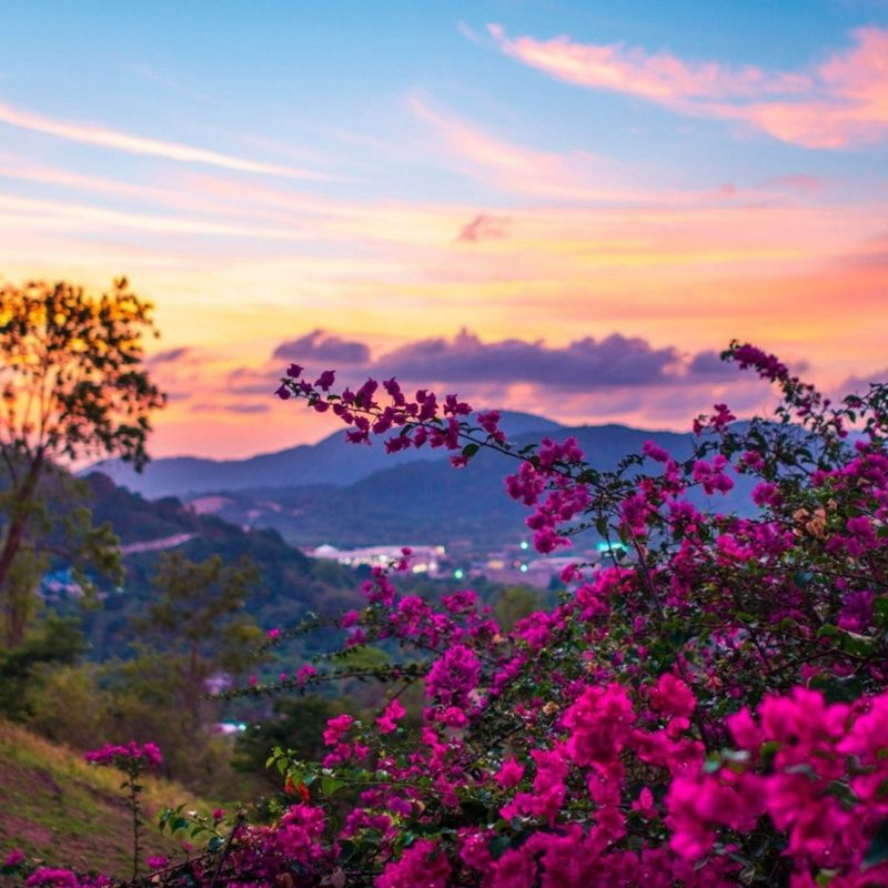 10 Most Popular Springtime Pictures For Desktop FULL HD 1920×1080 For PC Background 2021 free download a sunset in springtime spring pinterest spring wallpaper 800x800