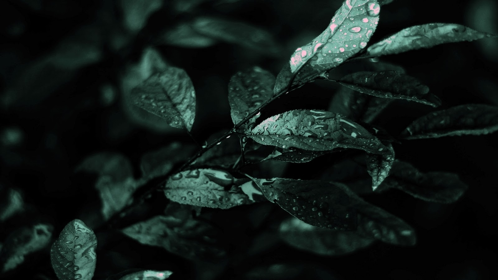 abstract dark nature hd wallpapers - hdwallpapers360 | hd wallpapers