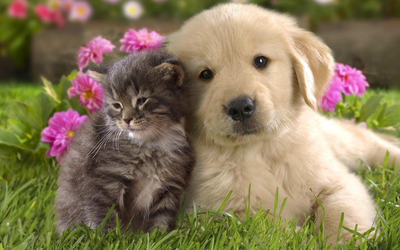 adorable: cats & dogs best friends forever | life with cats