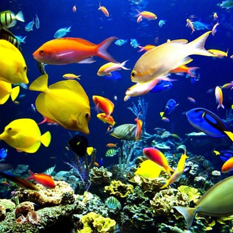 10 Best Tropical Fish Wallpaper Hd FULL HD 1080p For PC Desktop 2021 free download afficher limage dorigine coloriage pinterest hd laptop 800x800