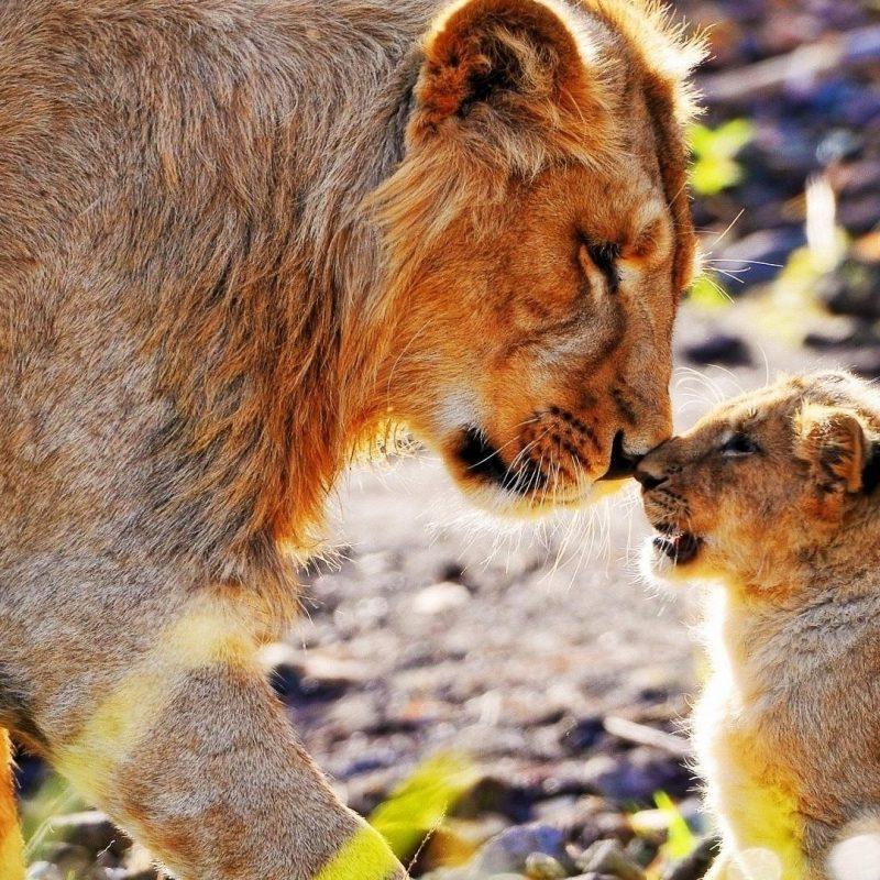 10 Best African Safari Animals Wallpaper FULL HD 1920×1080 For PC Desktop 2020 free download african animals wallpaper hd pixelstalk 1 800x800