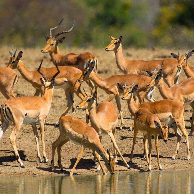 10 Best African Safari Animals Wallpaper FULL HD 1920×1080 For PC Desktop 2020 free download african animals wallpaper hd pixelstalk 2 800x800