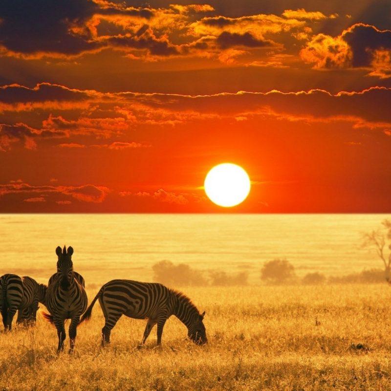 10 Best African Safari Animals Wallpaper FULL HD 1920×1080 For PC Desktop 2020 free download african animals wallpaper hd pixelstalk 800x800
