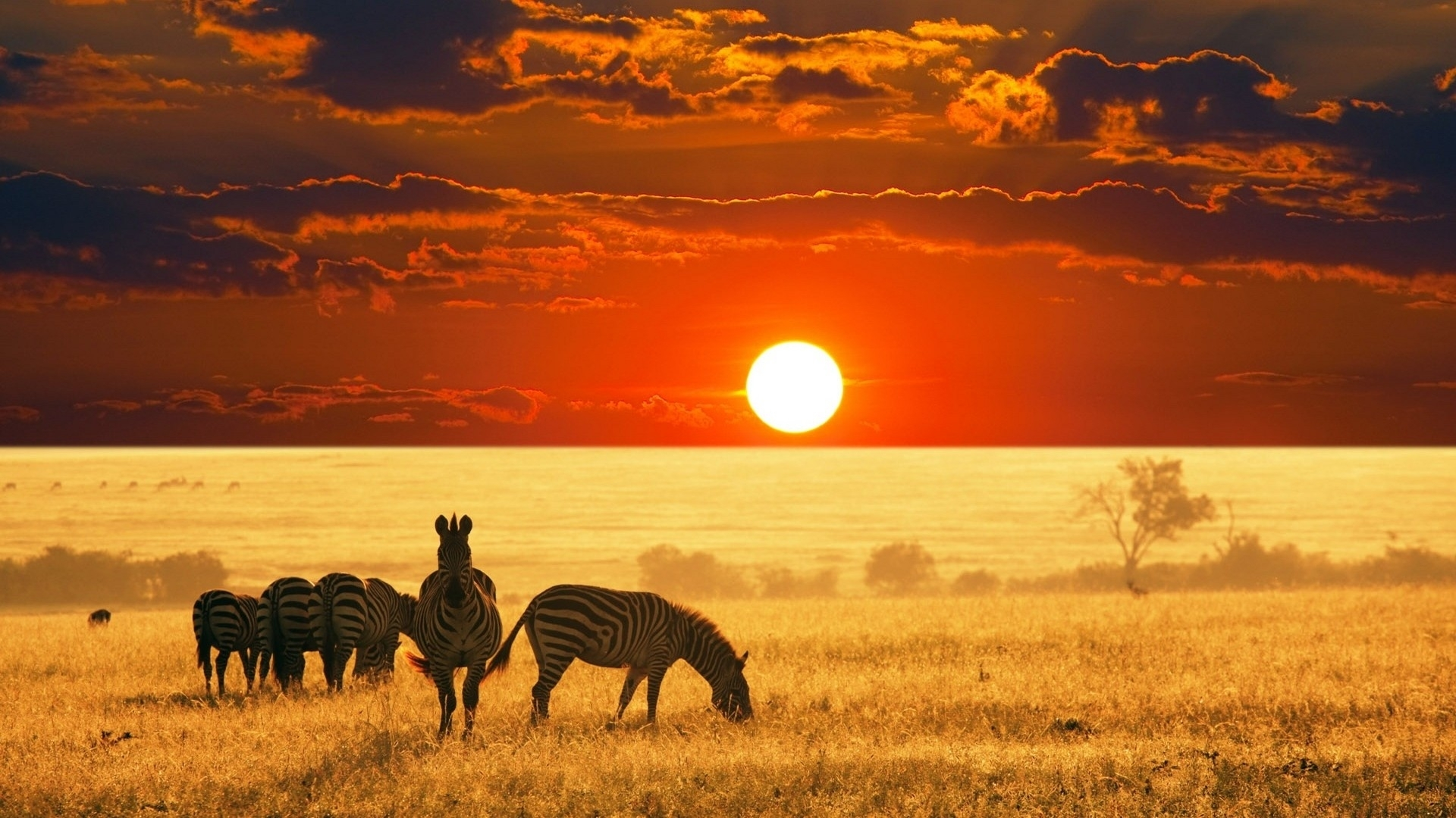 african animals wallpaper hd | pixelstalk