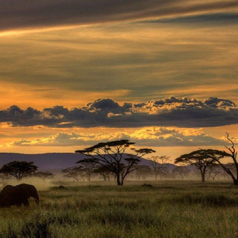 10 Best African Safari Animals Wallpaper FULL HD 1920×1080 For PC Desktop 2020 free download african safari 3383 1280x800 px hdwallsource 800x800