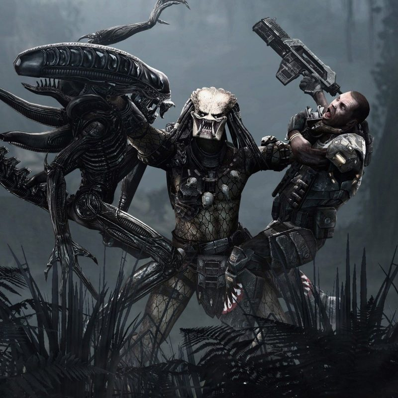 10 New Alien Vs Predator Wallpaper FULL HD 1080p For PC Background 2018 free download alien vs predator aliens vs predator pinterest predator alien 800x800