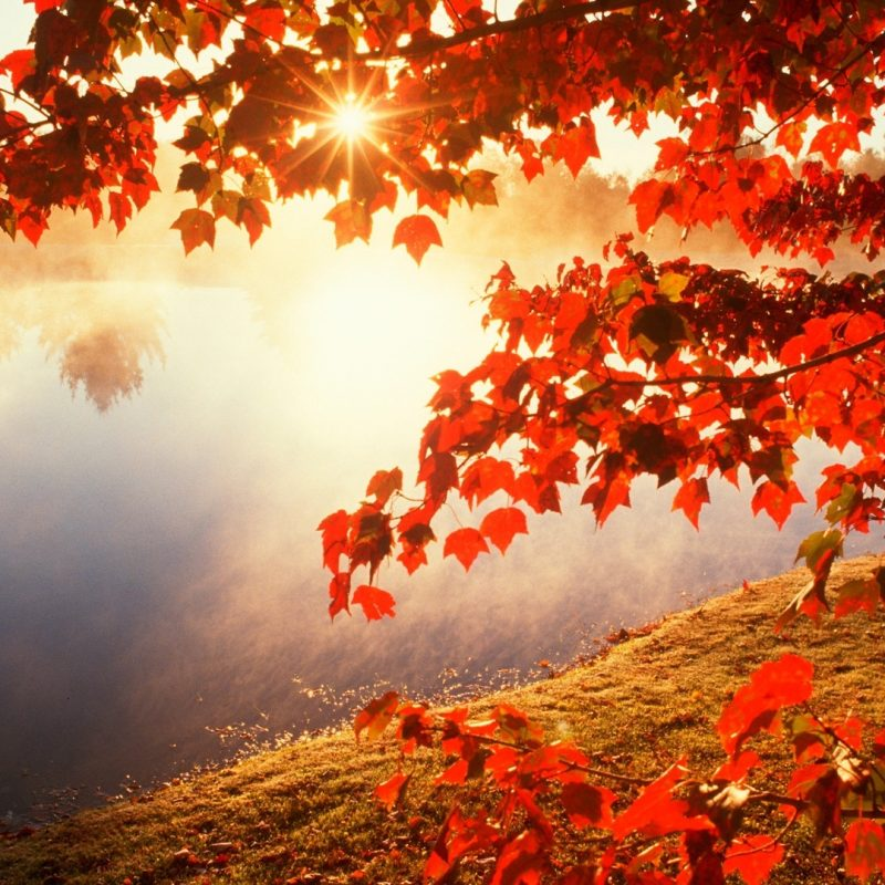 10 Best Fall Wallpapers For Desktop FULL HD 1080p For PC Background 2021 free download amazing hd quality wallpapers collection fall wallpapers 36 of 800x800