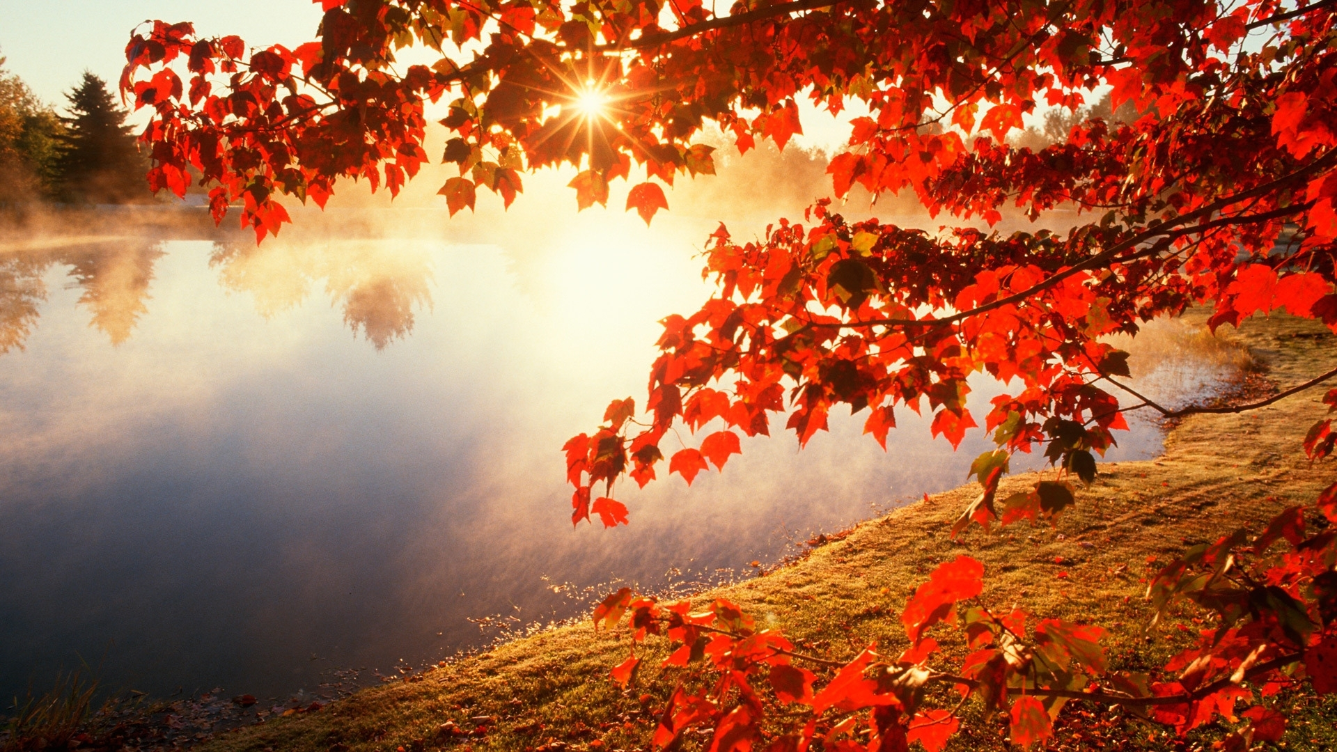 amazing hd quality wallpaper's collection: fall wallpapers (36) of