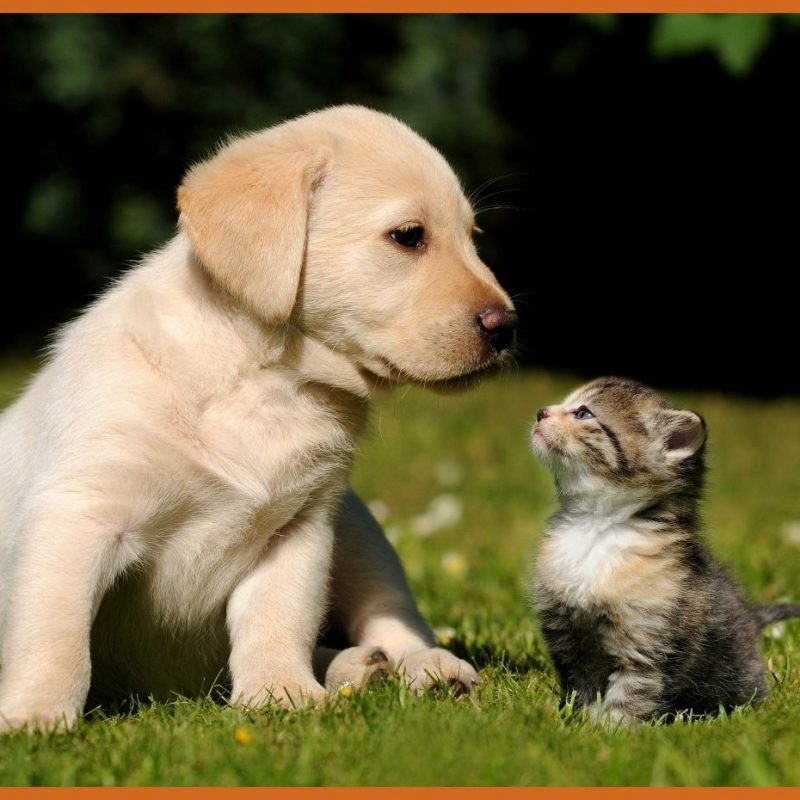 10 New Cute Kitten And Puppy Pictures FULL HD 1080p For PC Desktop 2018 free download amazing kitten and puppy mobile long of cute for wallpaper ideas 800x800