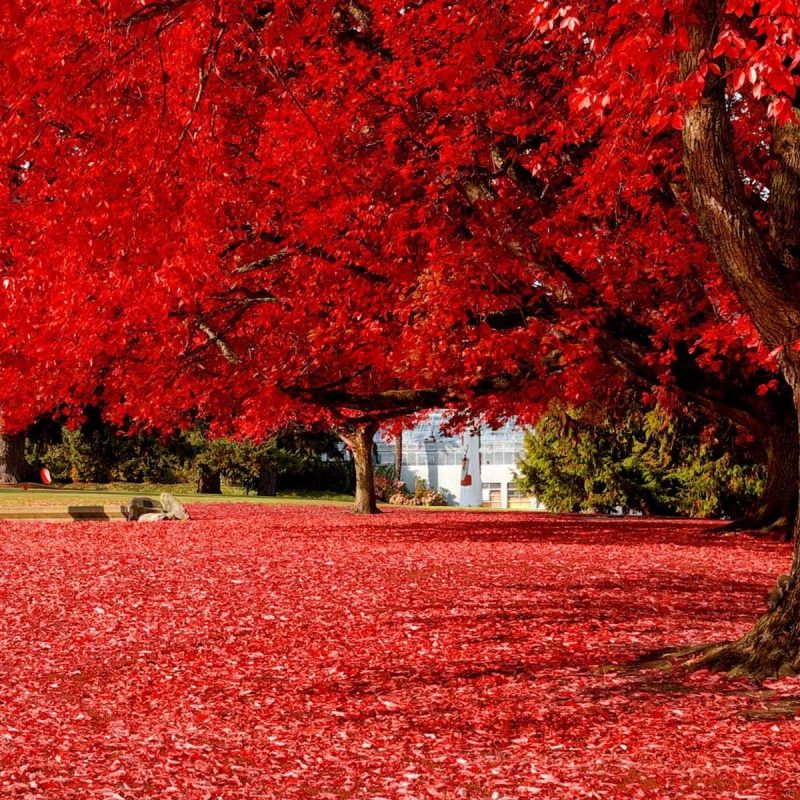 10 New Red Nature Wallpaper Hd FULL HD 1920×1080 For PC Desktop 2018 free download amazing red tree hd nature wallpapers for mobile and desktop 800x800