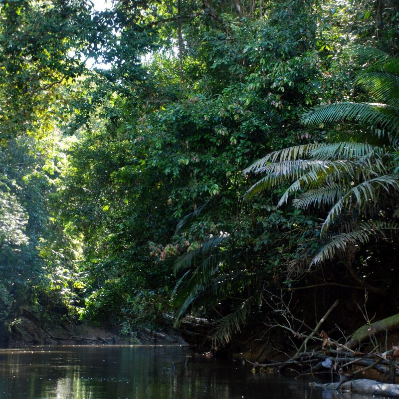 10 Top Pictures Of The Amazon Rainforest FULL HD 1920×1080 For PC Desktop 2020 free download amazon rainforest google search color grading pinterest 1 800x800