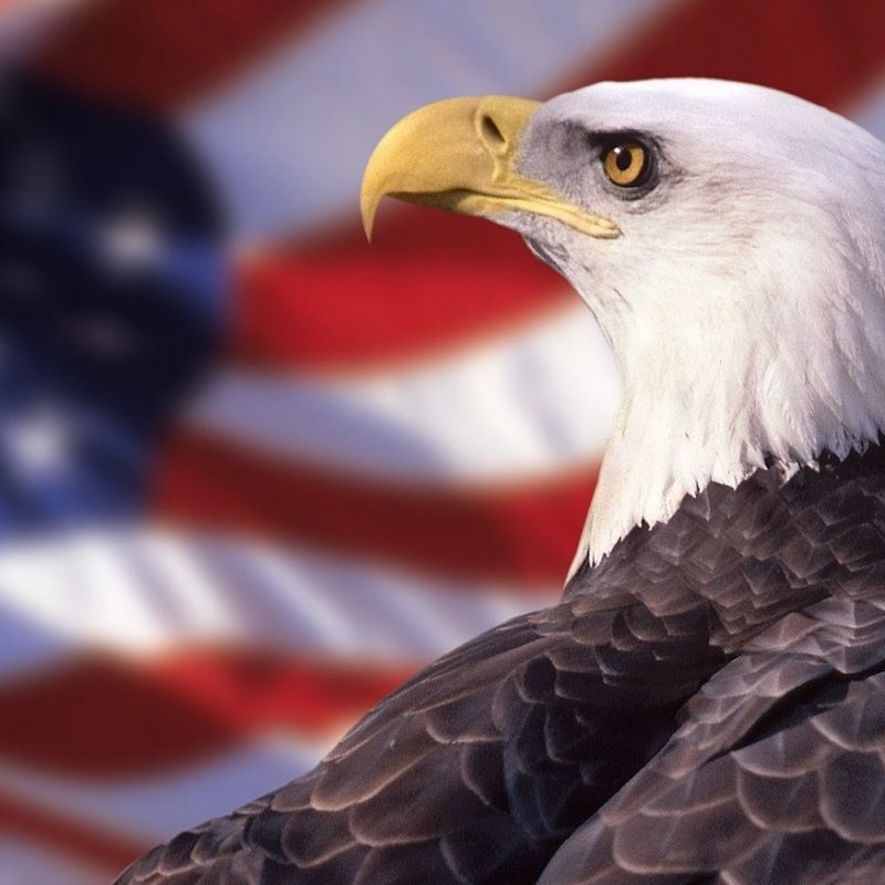 10 Most Popular American Flag Eagle Wallpaper FULL HD 1080p For PC Desktop 2018 free download american flag eagle wallpaper america e29da4 the red white and blue 800x800