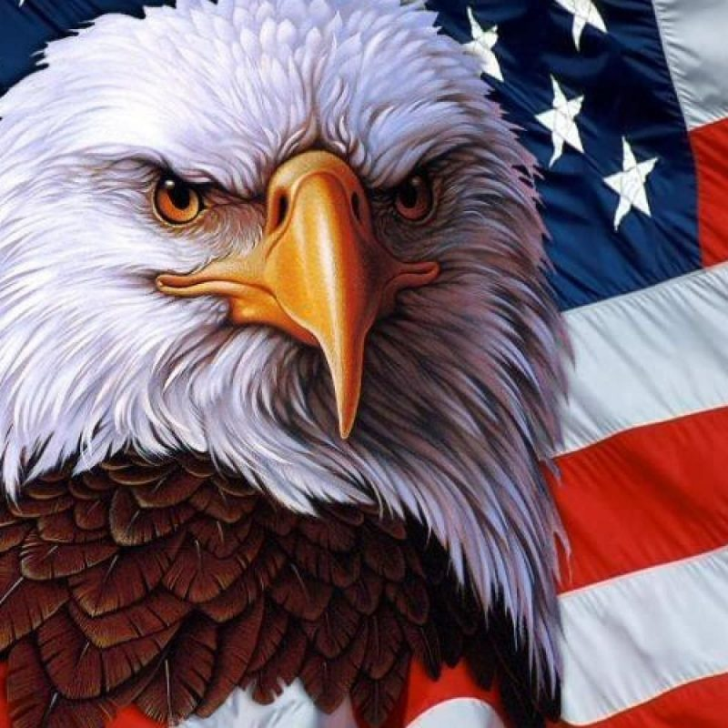 10 Most Popular American Flag Eagle Wallpaper FULL HD 1080p For PC Desktop 2018 free download american flag wallpaper images 54dm easyoffer my america 800x800