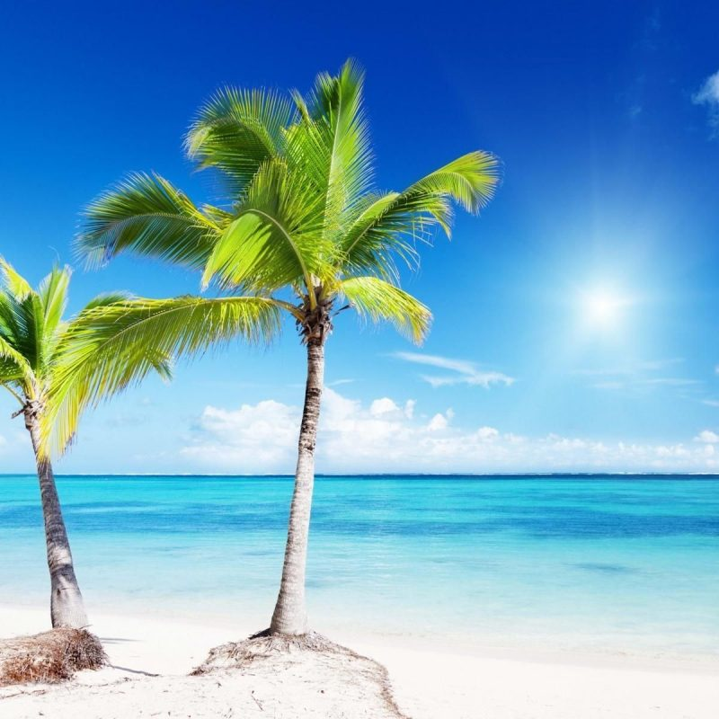 10 Top Beach And Palm Tree Wallpaper FULL HD 1920×1080 For PC Background 2018 free download android beach wallpapers group 1600x1200 palm trees beach wallpapers 800x800