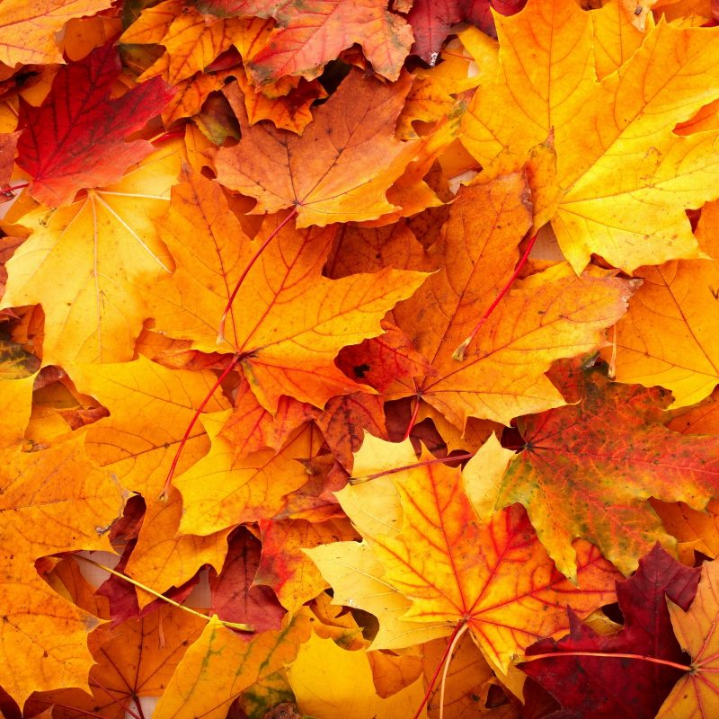 10 Latest Fall Leaves Desktop Background FULL HD 1920×1080 For PC Desktop 2018 free download android wallpaper fall colors hair and beaut pinterest fall 800x800