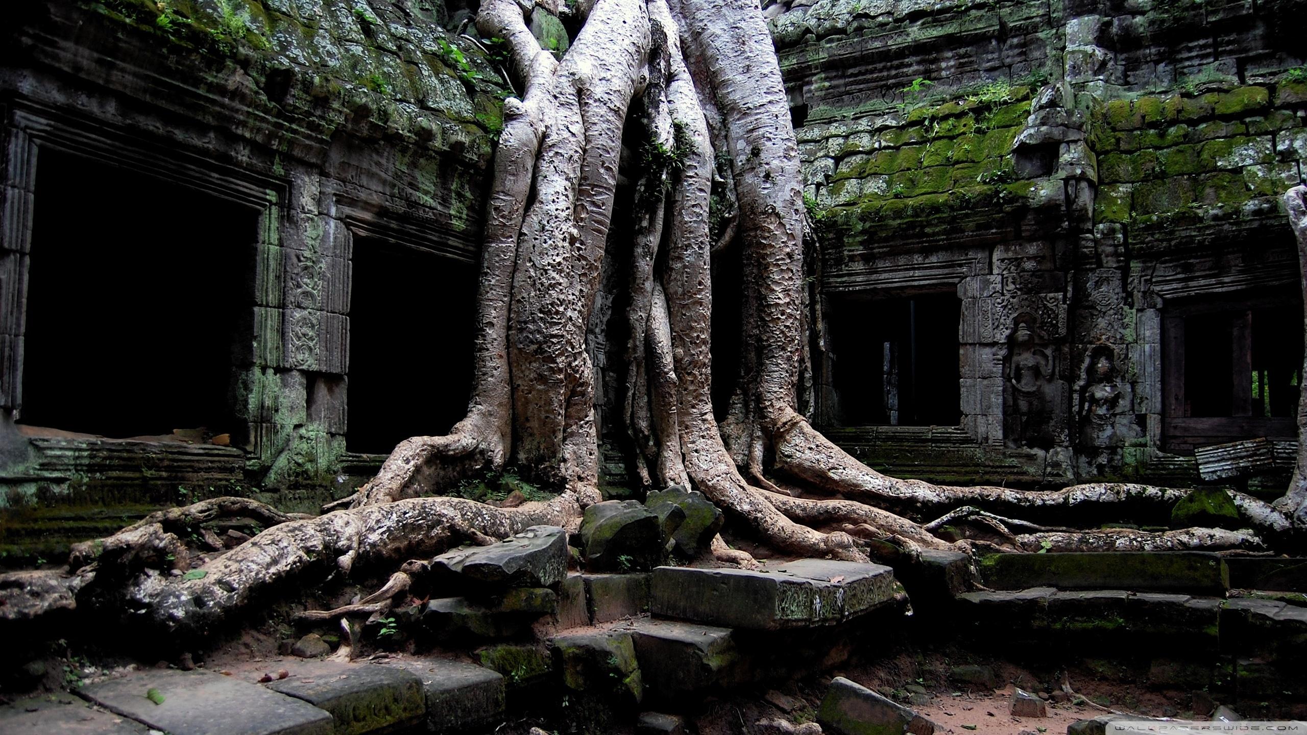 angkor wat temple, cambodia ❤ 4k hd desktop wallpaper for 4k ultra
