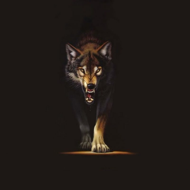 10 Most Popular Hd Wolf Wallpapers 1080P FULL HD 1080p For PC Desktop 2020 free download angry wolf wallpaper group with 59 items 800x800