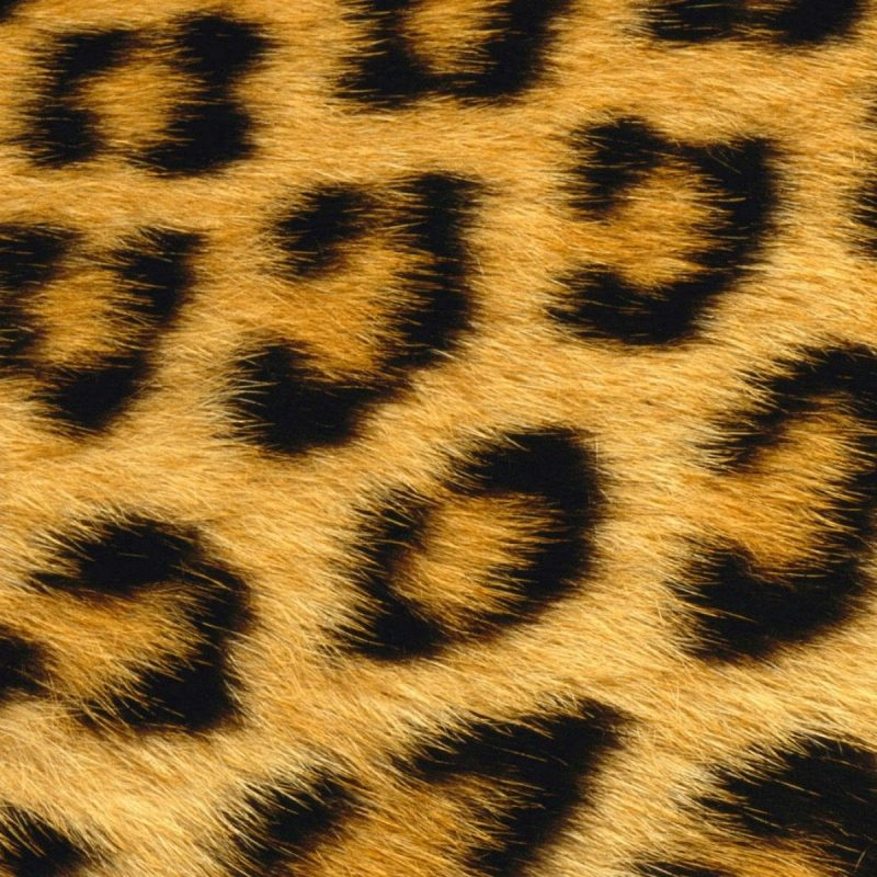 10 New Leopard Print Wallpaper Hd FULL HD 1080p For PC Background 2020 free download animal hd wallpapers animal desktop wallpaper luipaard print 800x800