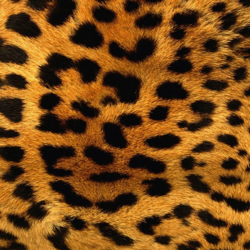 10 New Leopard Print Wallpaper Hd FULL HD 1080p For PC Background 2020 free download animal print desktop backgrounds wallpaper cave 800x800