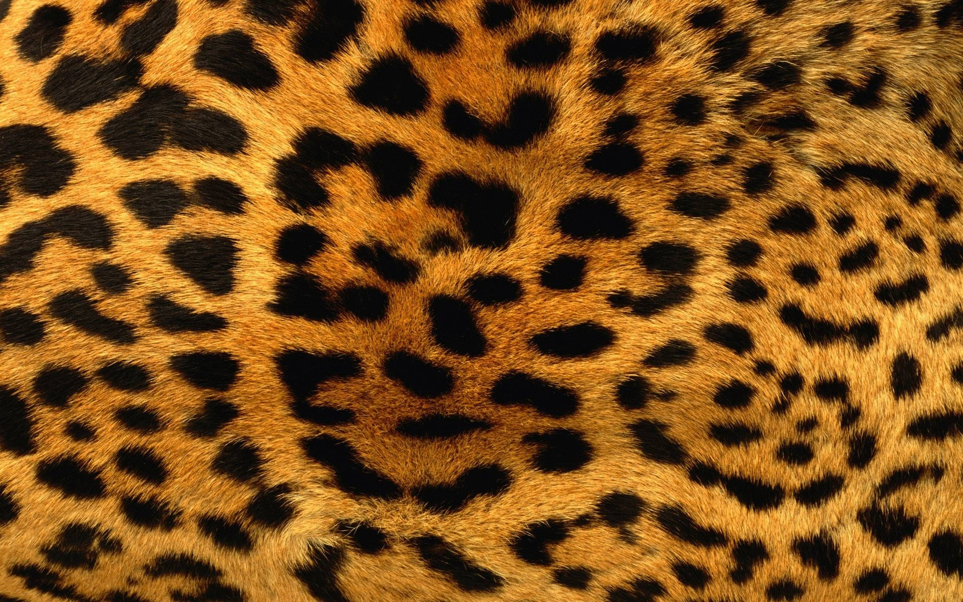 animal print desktop backgrounds - wallpaper cave