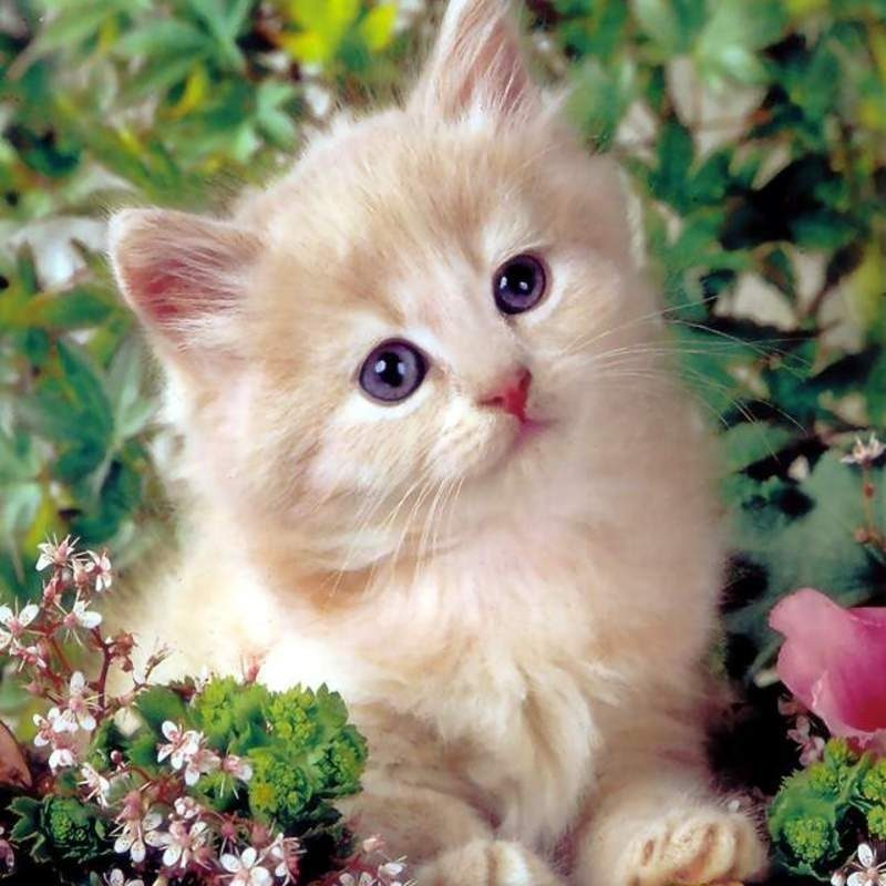 10 Best Cute Kittens Wallpapers For Desktop FULL HD 1080p For PC Desktop 2020 free download animals birds cute kittens wallpapers desktop phone tablet 800x800
